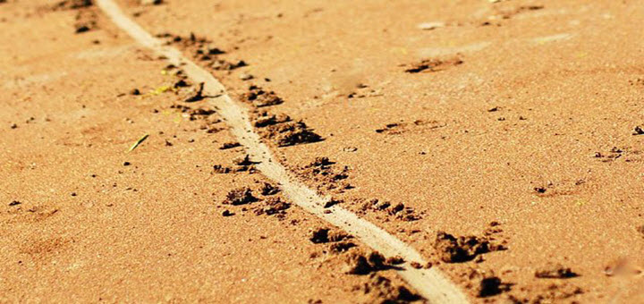 The Line in the Sand by Liberal Lunacy Shannon